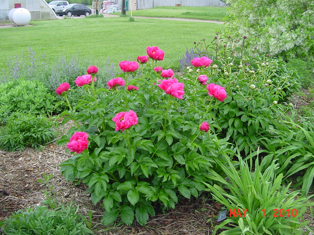 Blog Hasting Plants Flowers Perennials And Annuals Evansville